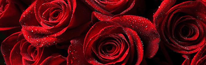 Valentinstag (14.2.): Blumen Für Die Lieben Kunden